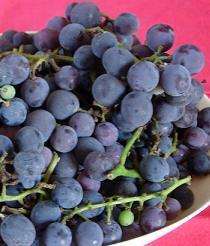 Liquori liquore di uva fragola for Uva fragola in vaso